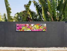 Graffiti Printed Wall Art by Graphic Glass Services Qld