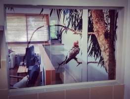 Digitally Printed Film Laminated Glass Window Panels by Graphic Glass Services Qld