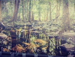 Digitally Printed Creek Image to Glass by Graphic Glass Services Qld