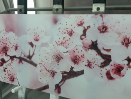 Digitally Printed Pink Blossom Image to Glass by Graphic Glass Services Qld