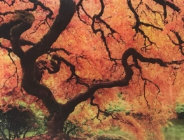 Vibrant Autumn Tree Digitally Printed Panel by Graphic Glass Services Qld